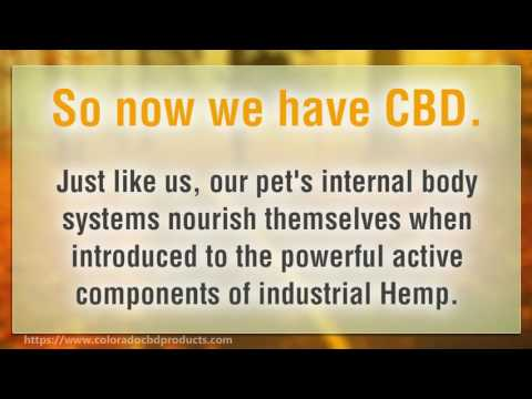 The Truth About Cbd For Dogs   Cbd Treats for Dogs