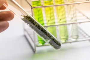 analysis of cannabis in laboratory image