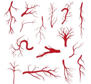 blood vessels image